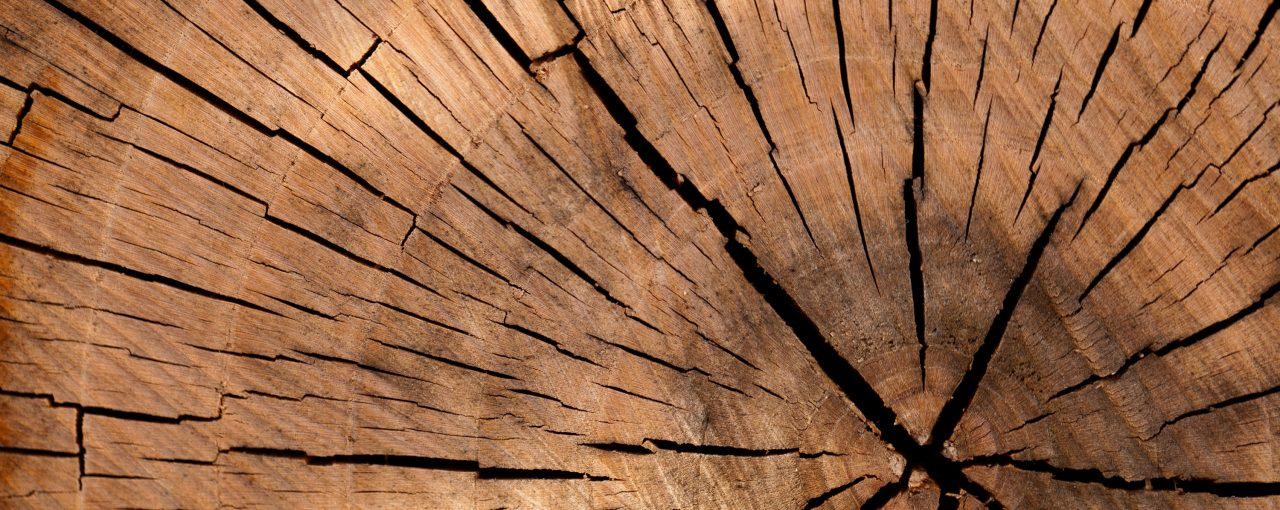 ¿Tienes madera de emprendedor?